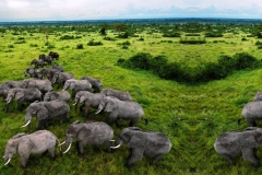 Many-QE-NP-Elephants